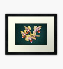 Orchid Flower Unusual Colors Natural Framed Print