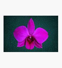 Large Light Purple Award Winning Orchid Photographic Print