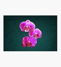 Light Painting Purple Award Winning Orchid Photographic Print