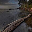 Morning Light. by Warren  Patten