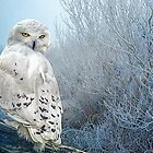 The Mystical Snowy Owl by Tarrby