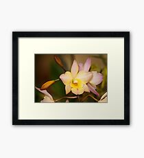 Orchid Unusual Colored Flowers Framed Print