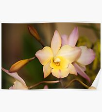 Orchid Unusual Colored Flowers Poster