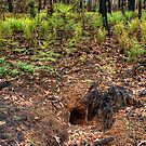 Mt Irvine - Wombat Hole by Ian English