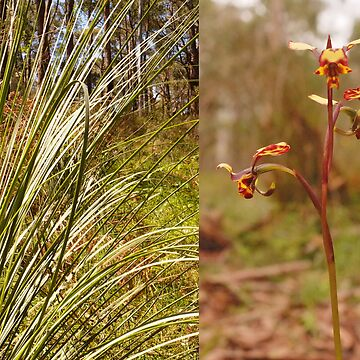 Grass tree and orchid - Sinclair's Gully, Norton Summit, Adelaide Hills by ChateauGlenunga