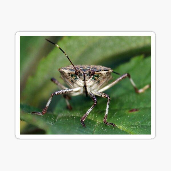 Brown Stinkbug Face  Sticker