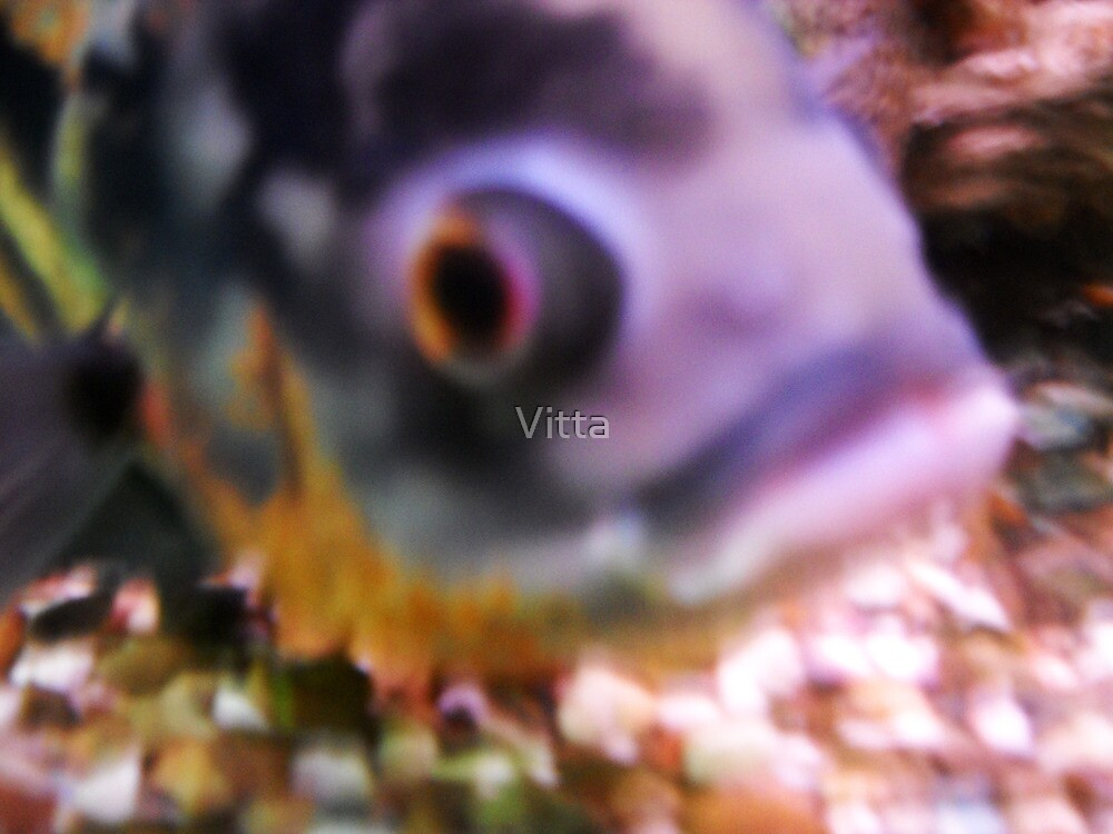 Colours Fish by Vitta