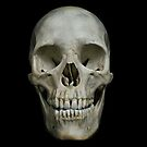 ANDREW CAMPBELL: SKULL: 01 by artforum