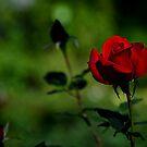 Whispering in Red by Brian Bo Mei
