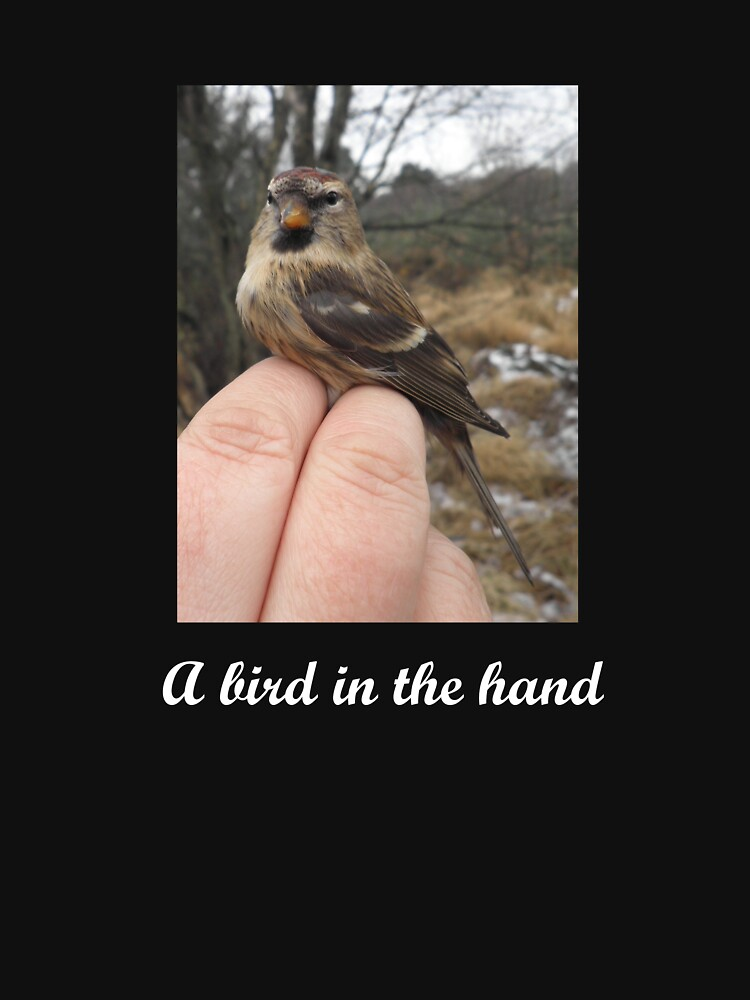 A bird in the hand (Redpoll) by Merlin13