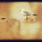 Bird's Eye View by Adrena87