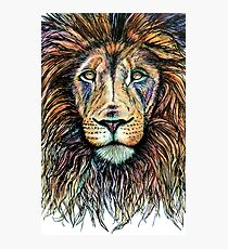 Rainbow Lion Photographic Print