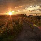 Long Wrangle Farm, Somerset by Jonathan Gazeley