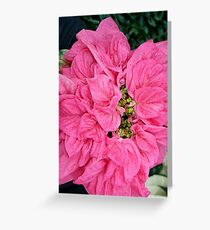 Pink Velvet Greeting Card