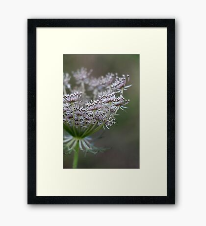 Wildling - No. 1 Framed Print