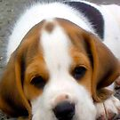 Beagle by Mikeb10462
