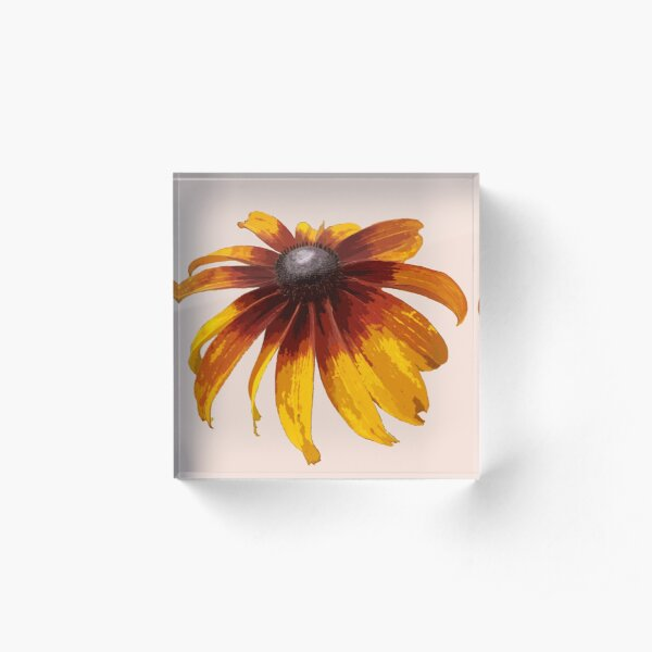 Black-Eyed Susan - Pale Pink Acrylic Block