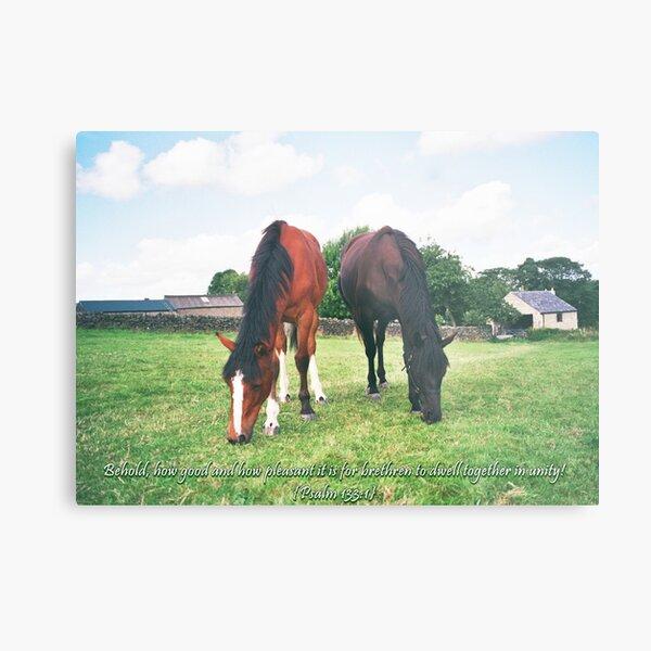 Horse Friends Psalm 133:1 Metal Print