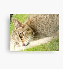 Graceful Kitty Metal Print