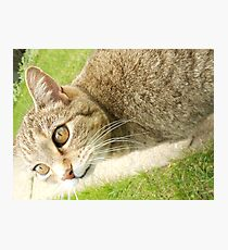 Graceful Kitty Photographic Print