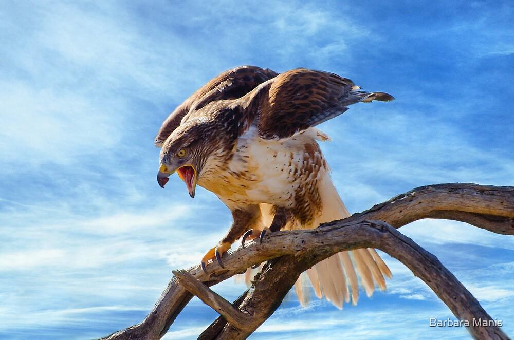 Hawk Landing by Barbara Manis