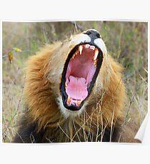 A great big yawn !! Poster
