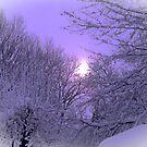 snowy sunrise by Jamaboop
