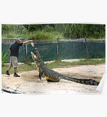 Huge Saltwater Crocodile Feeding Poster