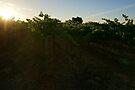 Vines by Emma Holmes