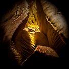 Inside a Toadstool by Josie Jackson
