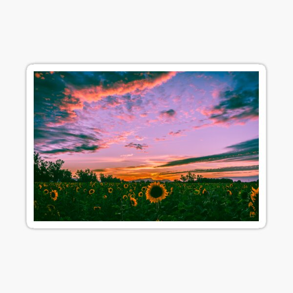 Sunflowers at sunset Sticker