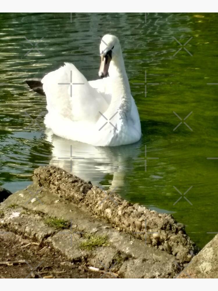 M.I. #48  ☼  Swan - Shot 6 (Pearson Park) by Naean