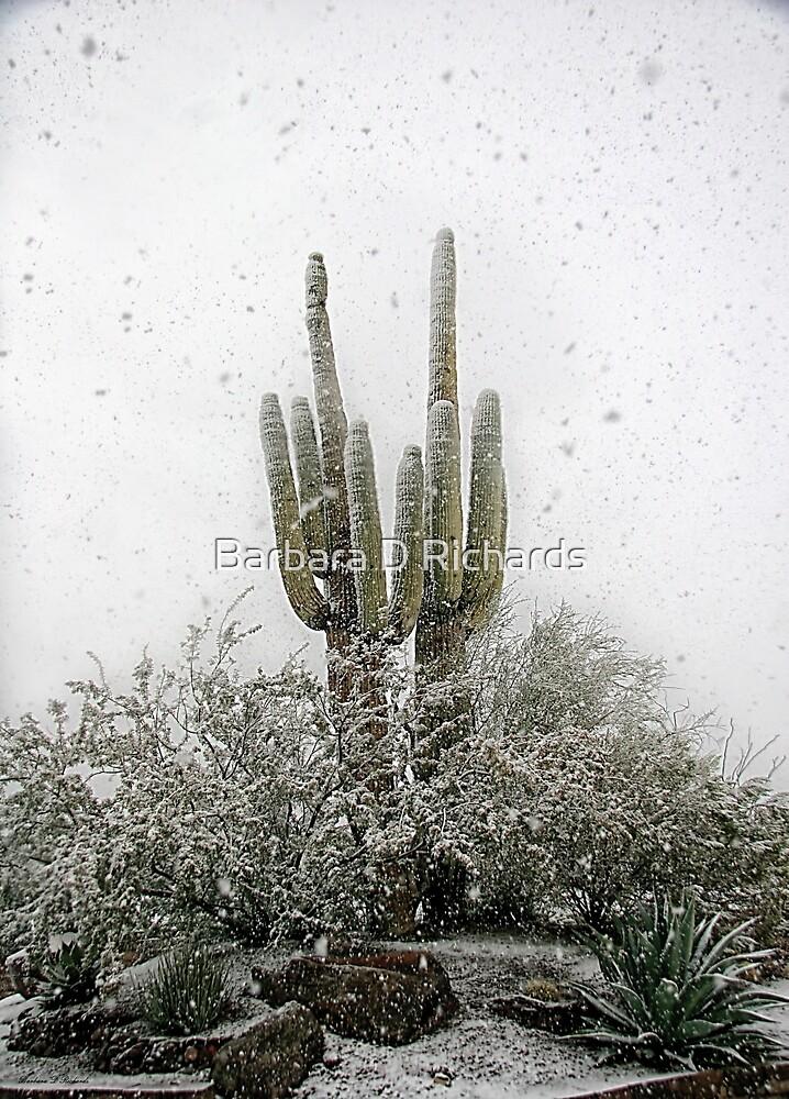 Arizona Snowstorm by Barbara D Richards