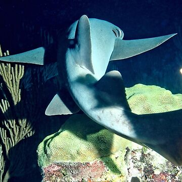 Nurse Shark on Night Dive by Scubagirlamy