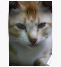 Pet cat garfield Poster