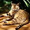 A Cat Basking In The Sun