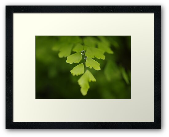 Maidenhair Magic by Clare Colins