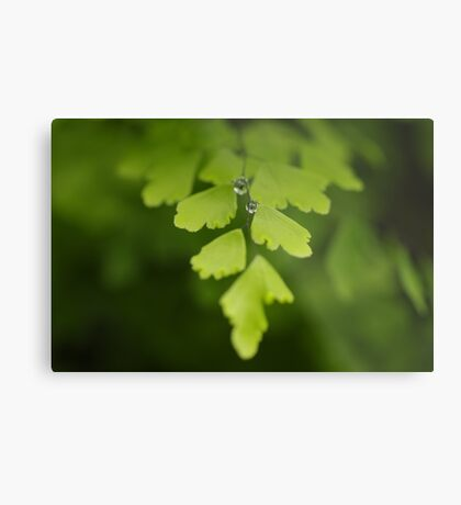 Maidenhair Magic Metal Print