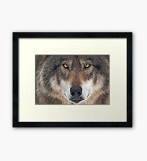 ... yes...I am a wolf-addict...  Framed Print