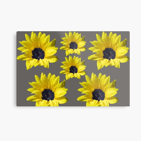 Sunflowers On Grey Metal Print