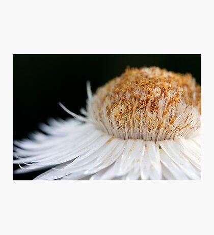 Sunny Flower Photographic Print