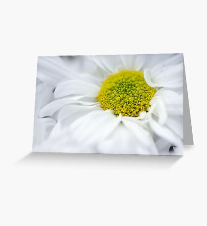 Delicate Flower Greeting Card