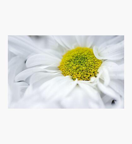 Delicate Flower Photographic Print