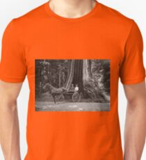 Carriage in the Hollow Tree T-Shirt