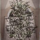 Christmas Tree by Jacinthe Brault