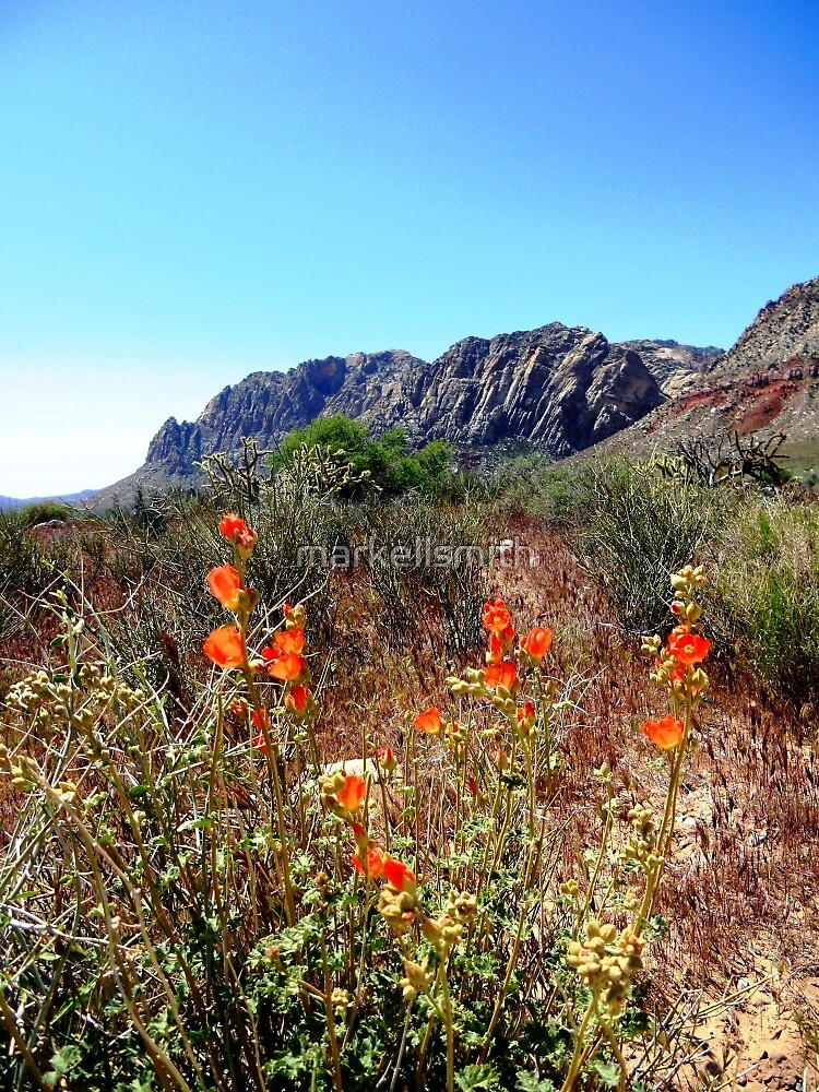 A Flower in the Desert  by markellsmith