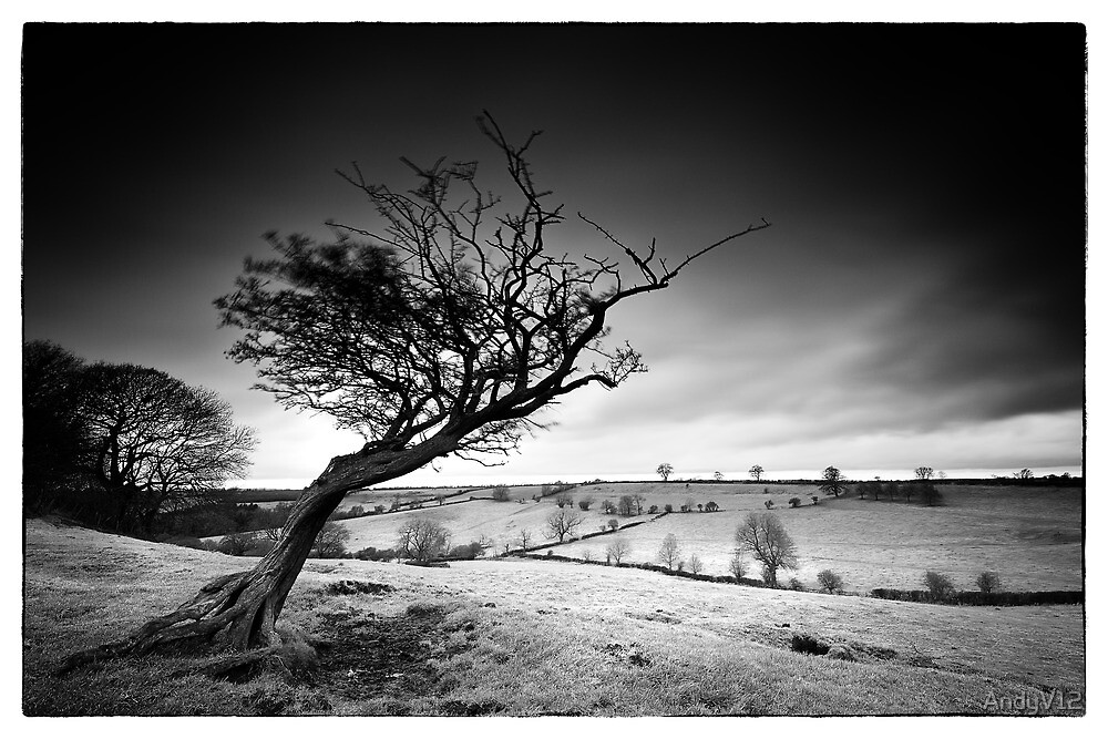 The Judder Tree by Andy Freer