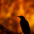 Grackle by Richard G Witham