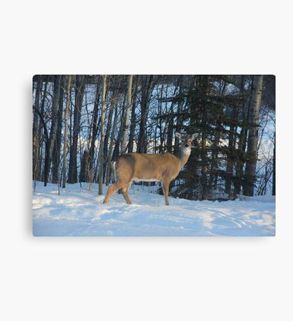 Heres My Best Pose Canvas Print