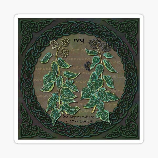 Celtic Tree Calendar Ivy Sticker